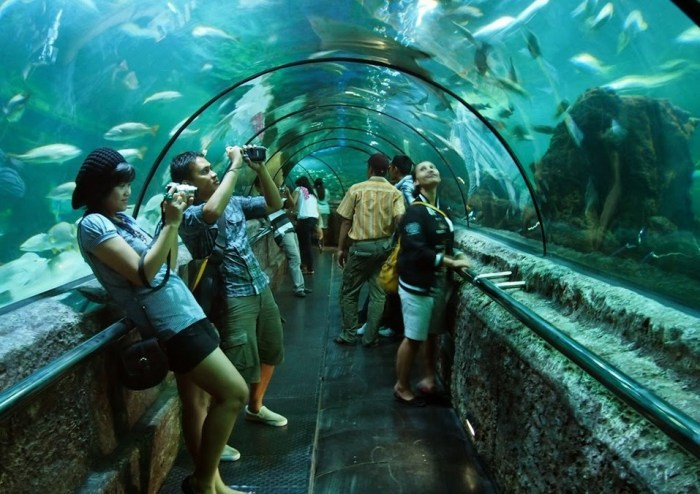 wisata akuarium jakarta